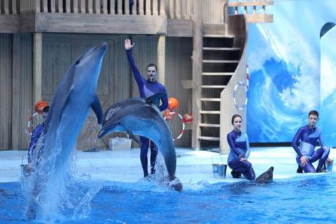Permalink to: Цирковое представление с морскими животными